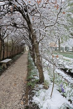 Spring flowers in a late snow. Governor's Palace Grounds. Colonial Williamsburg's Historic Area.   Colonial Williamsburg, Williamsburg, Virginia Photo by David M. Doody