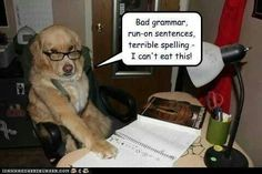 funny captions, animal memes, animal pictures with captions Funny Dog Memes, Funny Animal Memes, Cute Funny Animals, Funny Cute, Funny Dogs, Funny Captions, Stupid Jokes, Hilarious Jokes, Animal Jokes