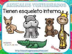 Tipos de animales claseficación (2) Teaching Activities, Teaching Kids, First Grade Science, Animal Science, Language Lessons, Spanish Classroom, Science And Nature, Animal Kingdom, Winnie The Pooh