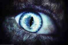 Viewing Single Post From: Loup-Garou Is French For Werewolf Werewolf Eyes, Werewolf Hunter, Demon Eyes, Werewolf Art, Timberwolf, Vampires And Werewolves, E Dawn, Eye Art, Animal Sculptures