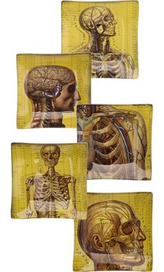 """ANATOMICAL CHART MINI PLATES    You're gonna jump outta your skin when you see these anatomically amazing plates! This set includes 5 mini glass plates featuring vintage inspired full color medical illustrations. These plates have a sleek design & amazing details. Keep out as decor or can be used for serving.  Hand washing recommended & not microwave safe.  5"""" by 5""""    $35.00"""