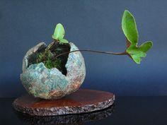 Kusamono bonsái: kokedama