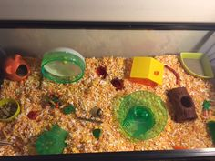 Page 839 of 896 - Proud of your hamsters cage - posted in Supplies & Accessories: . Hamster Bin Cage, Hamster House, Hamsters, Rodents, Hamster Ideas, Small Animals, Dumpling, Pet Care, Daisy