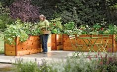 I really like the height of these raised beds! Elevated Cedar Raised Garden Beds - The Green Head