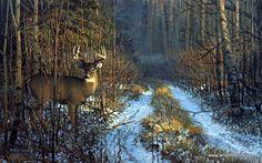 Wildlife Artist Don Kloetzke Unframed Whitetail Deer Print Prime Time | WildlifePrints.com
