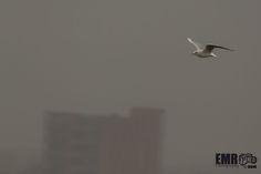 Wou wat kan je vliegen  by EMR Photography