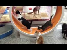 They Needed Some Exercise, So Watch What They Got The Cats, It's Just GENIUS. | The Meow Post