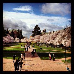 @University of Washington - the quad in spring!!  always beautiful