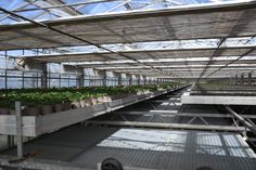2. Etage: Unterm Dach ist es besonders warm und die Pflanzen können hier in Ruhe heranwachsen. Photo And Video, Instagram, Glass House, Plants