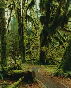 Hoh Rainforest, Washington State (omg.... May be going to WA in March.... I really want to hike here!! www.palsnap.com