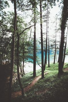 Coyote Atelier photography love: a forest on a clear blue lake.