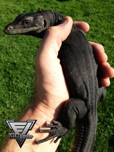 Issues With Keeping Lizards As Pets Reptile House, Reptile Room, Black Animals, Cute Animals, Big Lizard, Bearded Dragon Cage, Monitor Lizard, Rottweiler Mix, Akita Dog