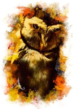 Book Cover Stock Image | Creative mixed media photo on a wise old owl with colourful painted frame. Bird art