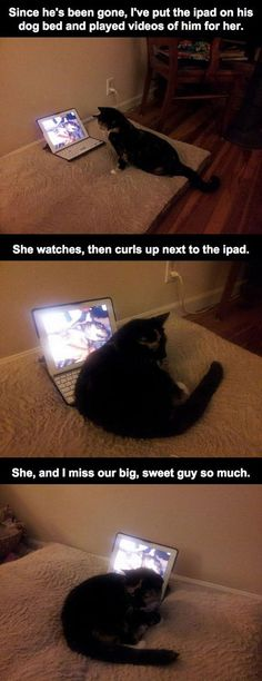 He Found His Cat Strangely Sitting On His Laptop But When He Figured Out Why… He Broke Into Tears.