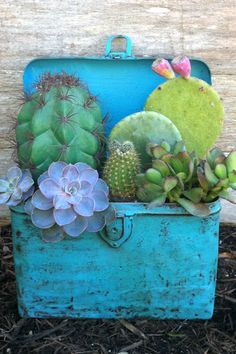 21 creative succulent container gardens you can buy or DIY, like this upcycled container.