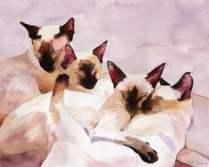 Digital Print Siamese Cat Art from Watercolor Painting Seal Point Chocolate Cat Lover unique gift custom large huge big hand painted Animals Watercolor, Watercolor Cat, Watercolor Paintings, Painting Art, Watercolors, Large Painting, Siamese Cats, Cats And Kittens, Ragdoll Cats