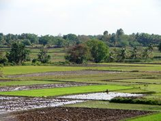 Lush, fertile fields stretch as far as the eye can see.   #india #incredibleindia #travel