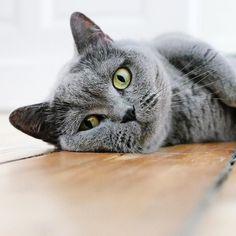 Happy #Caturday