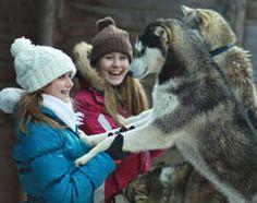 Schlittenhunde Grundkurs - als Geschenkidee   mydays