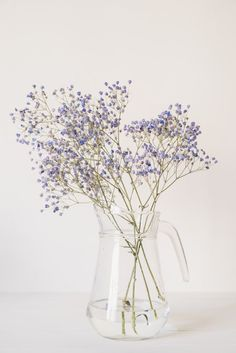 Lavender Aesthetic, Flower Aesthetic, Purple Aesthetic, Aesthetic Backgrounds, Aesthetic Wallpapers, Soft Wallpaper, Flower Festival, Aesthetic Pictures, Dried Flowers