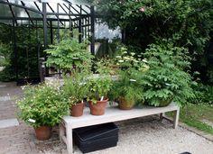 kleines topfgarten mit stil beste images der bfcabdafdadef holland