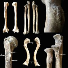 A century cemetery in Hungary has revealed through bones and artifacts the remains of soldiers from the Hungarian Conquest period. Archery Training, Upper Arm Bone, Arm Bones, Skeletal System, Carpathian Mountains, Frozen In Time, History Facts, Roman Empire, Archaeology