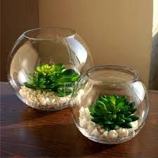 Composizione di piante grasse in vetro. Basta poco, quattro piantine grasse, ...