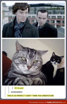 Sherlock kitties