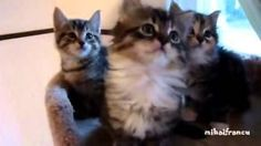 Synched #Kittens - #funny #cats