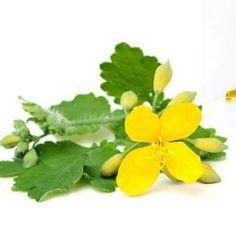 Herbs, Food, Plant, Biology, Recipies, Essen, Herb, Meals, Yemek
