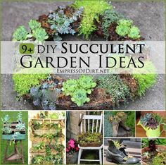 9+ DIY Succulent Garden Ideas at empressofdirt.net