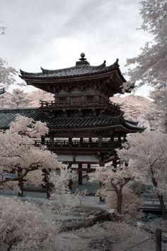 blooming in japan