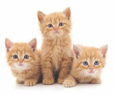 We're Feeding Cats Wrong — Ditch the Cat Food Bowls and Change the Schedules - Catster Jackie Brown, Orange Tabby Cats, Red Cat, Tabby Kittens For Sale, Agressive Dog Training, Feeding Kittens, Brown Kitten, Cat Behavior, Cat Food
