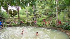 Hot Springs hiding in amongst the Rice Fields of Bali. Stuff To Do, Things To Do, Hot Springs, Fields, Bali, Rice, Things To Make, Spa Water, Laughter