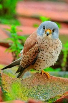 Find and save ideas about Colorful birds, Pretty birds, Beautiful birds and Tropical birds. Kinds Of Birds, All Birds, Birds Of Prey, Little Birds, Love Birds, Angry Birds, Pretty Birds, Beautiful Birds, Animals Beautiful