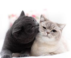 cutest kittens make our lives better every single day. Cute Cats And Kittens, Baby Cats, I Love Cats, Kittens Cutest, Baby Animals, Funny Animals, Cute Animals, Blog Chat, Beautiful Cats