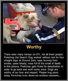 Not All of the Heroes of 9/11 Were Human Save a dog today:)