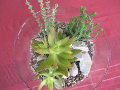 Indoor succulent terrarium by treelinedesignz.com Succulent Terrarium, Succulents, Indoor, Plants, Interior, Succulent Plants, Plant, Planets, Succulent Arrangements