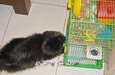 Persahabatan Kucing dan hamster