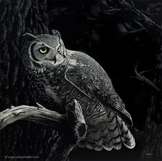 """American artist Cathy Sheeter creates realistic scratch drawings on ink coated boards. """"Many people can't believe that my very realistic animal artwork is created just… Realistic Face Drawing, Realistic Rose, Love Drawings, Animal Drawings, Art Scratchboard, Scratch Art, Portraits, Owl Art, Wildlife Art"""