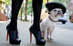 To: 10022-SHOE, Saks Fifth Avenue  From: Paris  Bonjour shoe lovers! Pierre is the most shoe-obsessed French bulldog on this side of Fifth Avenue and he's here to pay homage to the inimitable Christian Louboutin.  (Something about those red soles brings happiness and delight to every girl's soul!)  Allons-y!  (Source: 10022-shoe)