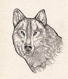 Wolf.  by Meggie Wood