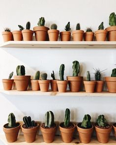 best seeds, manchester, planet x, plants vs zombies heroes pu. Cacti And Succulents, Planting Succulents, Planting Flowers, Deco Cactus, Cactus Flower, Cactus Plante, Plants Are Friends, Plant Aesthetic, Plant Information