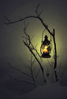 one lone lantern hung from a shrub or tree brank in the winter darkness. Wellcome home