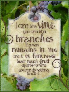 John 15:5 Christian faith Bible scripture verse. Spiritual inspiration and growth ...  I am the Vine ...
