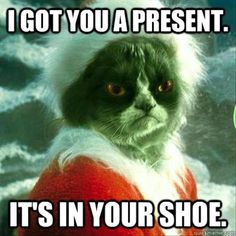Funny Cat Photo: Grouchy Grumpy Cat got you a Christmas present -- it's in your shoe. Christmas Quotes Grinch, Grumpy Cat Christmas, Christmas Humor, Christmas Animals, Merry Christmas, Funny Mom Memes, Cat Memes, Hilarious, Funny Stuff