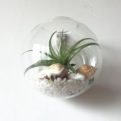 Pack-of-6-Glass-Planters-Wall-Hanging-Planters-Round-Glass-Plant-Pots-Hanging-Air-Plant-Pots-Flower-Vase-Air-Plant-Terrariums-Wall-Hanging-Plant-Container-12-cm-Diameter