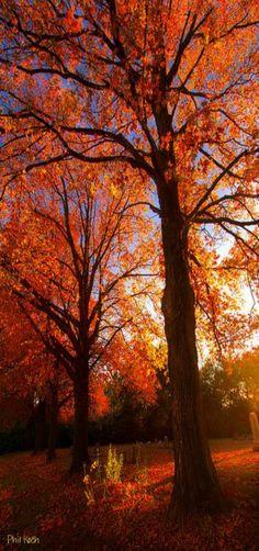 """Fall's Splendor"" - Horizons, Milwaukee, Wisconsin, USA by Phil Koch"