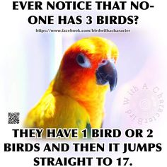 Love those birds!