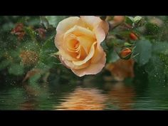 """Peaceful Music, Relaxing Music, Instrumental Music, """"Ever I Love You"""" by Tim Janis - YouTube"""